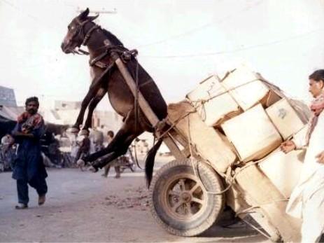 Llevan una carga que no es suya, y lo único que reciben es golpes y maltratos por su devota labor.