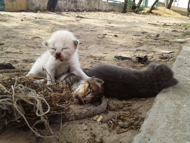 Gaticos en La Chinita - Iván Bernal Marín